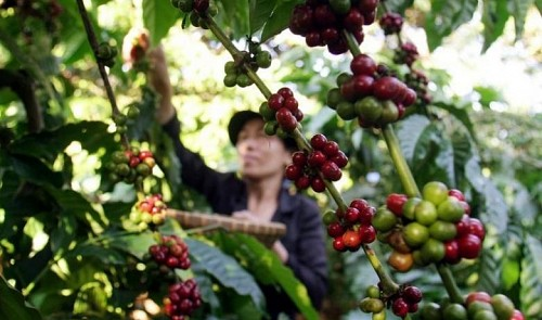 Vietnam exports of agricultural products suffers a bigblow