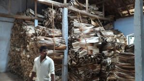 Ecogreeny_areca_palm_raw_materials